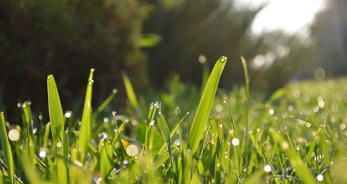 Żagiel przeciwsłoneczny: ciekawa alternatywa dla parasoli