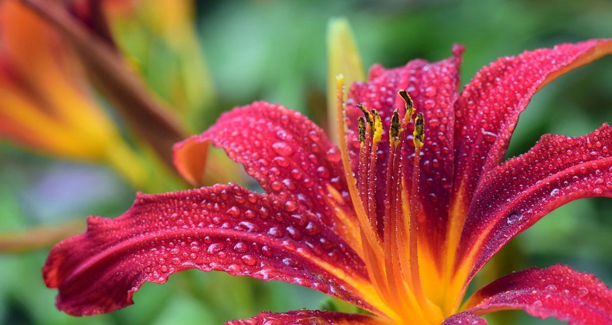 Kompleksowe zaopatrzenie ogrodnictwa